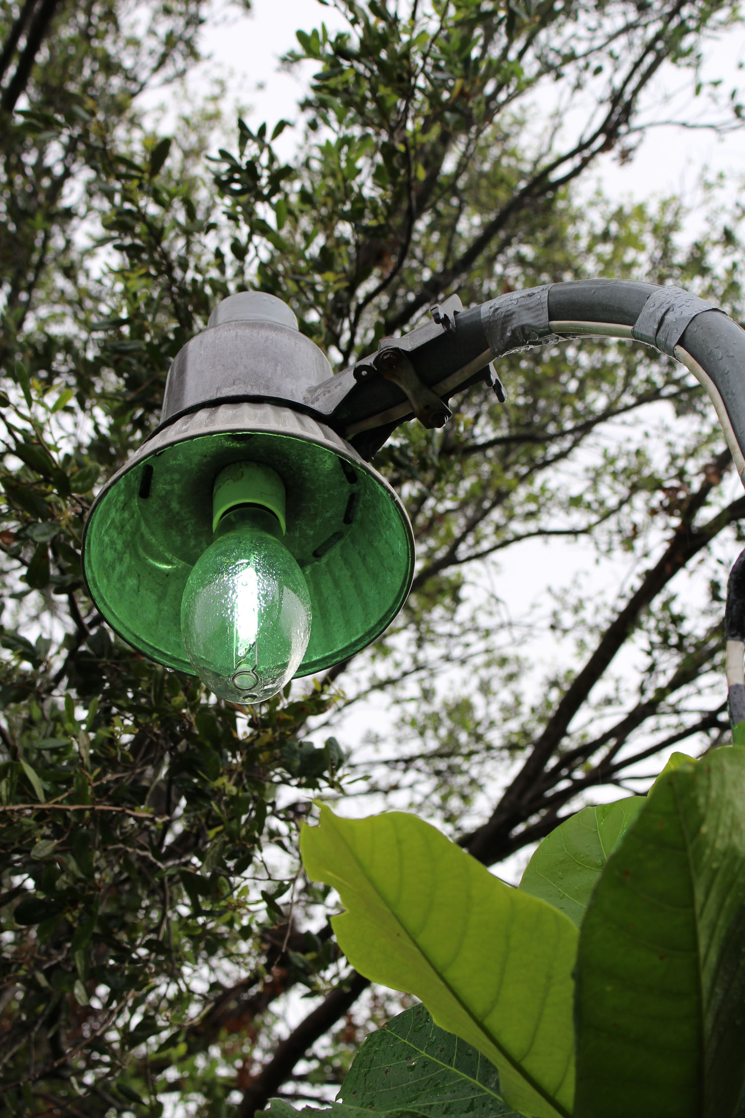 John DeFaro LIghts Back Off project lamp post top with bulb turning on depicting green glow 2017